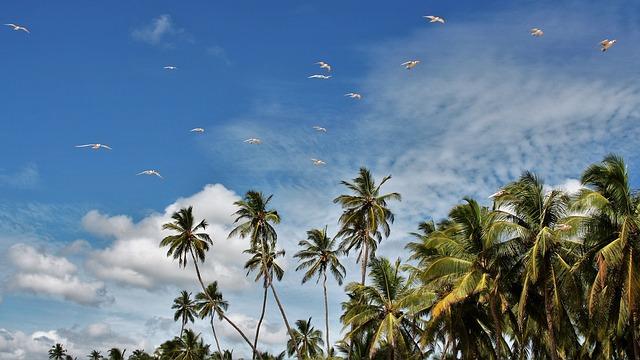 ptáci nad palmami