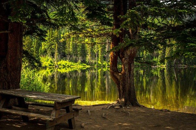 odpočinek v lese